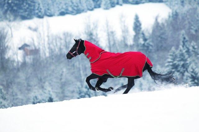 Paarden Deken